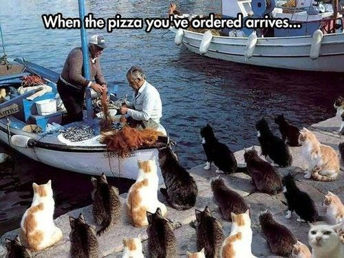 Cats,fishing,hungry,pizza