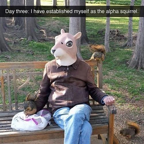 Do My Bidding, Squirrel Minions!
