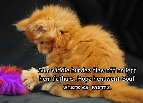 Sum widdle burdee flew off an leff hem fethurs. Hope hem went Souf where es  warmz.