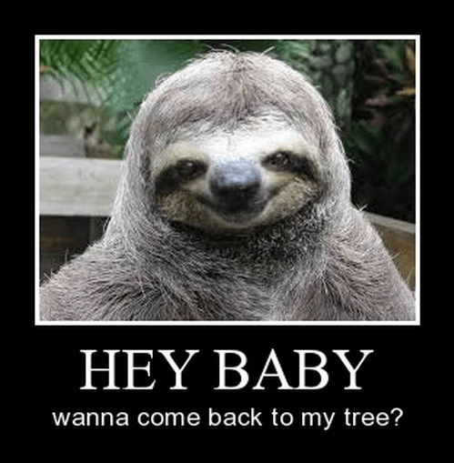 sexy times,funny,sloth