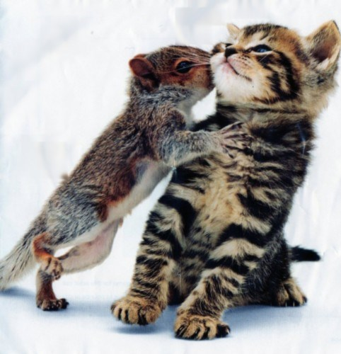cute,kisses,kitten,squirrels