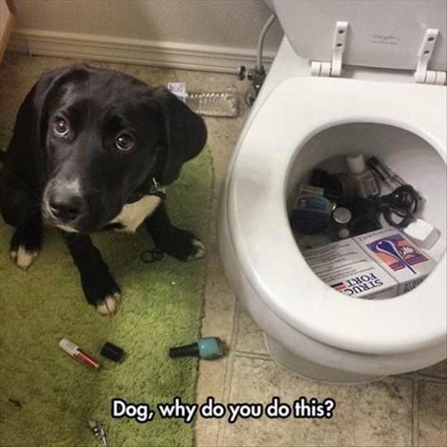 Cats,dogs,mischief
