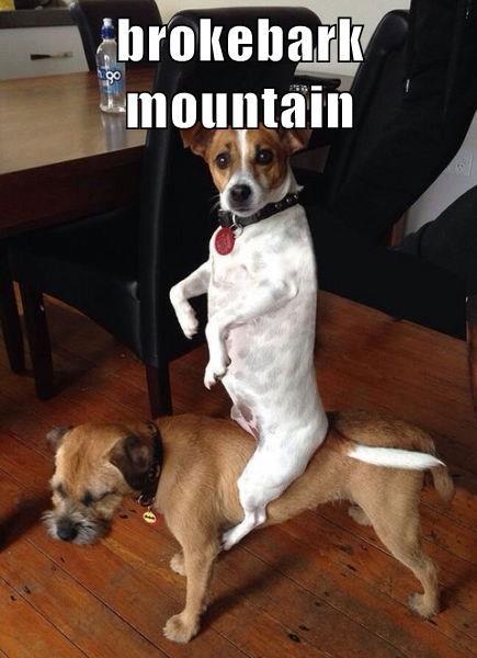 brokebark mountain