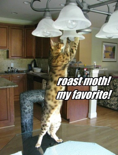 roast moth!  my favorite!