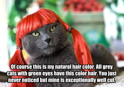 Of course this is my natural hair color. All grey cats with green eyes have this color hair. You just never noticed but mine is exceptionally well cut.
