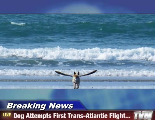 Dog Attempts First Trans-Atlantic Flight...