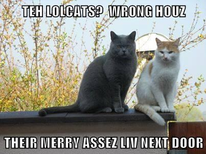 TEH LOLCATS?  WRONG HOUZ  THEIR MERRY ASSEZ LIV NEXT DOOR