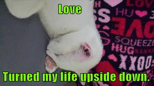 Love  Turned my life upside down.
