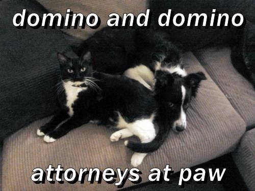 domino and domino  attorneys at paw