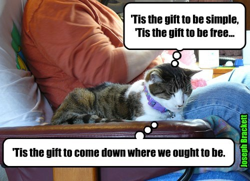 Gifted kitteh