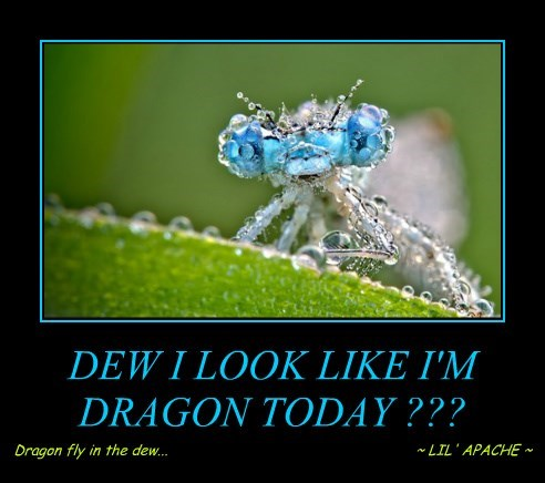 DEW I LOOK LIKE I'M DRAGON TODAY ???