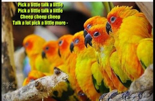 Parrot Yenta Chorus