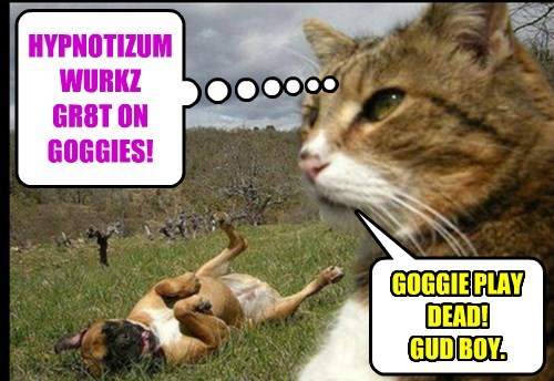 HYPNOTIZUM WURKZ GR8T ON GOGGIES!