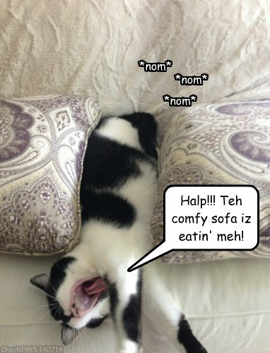 Even teh comfy sofa has to eat...