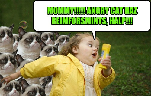 MOMMY!!!!! ANGRY CAT HAZ REIMFORSMINTS, HALP!!!