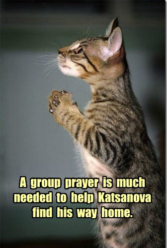 SovaPlum's kitteh Katsanova is missing :(