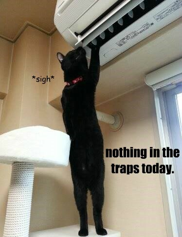 nothing in the traps today.