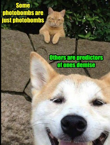 Some photobombs are just photobombs
