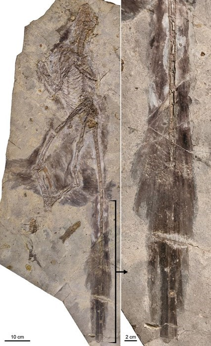 Discovery of the Day: Fossil of a Four-Winged Dinosaur Unearthed