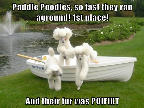 Paddle Poodles, so fast they ran aground! 1st place!  And their fur was POIFIKT