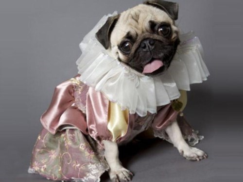 Finally!  A Shakespeare Production Starring All Pugs!