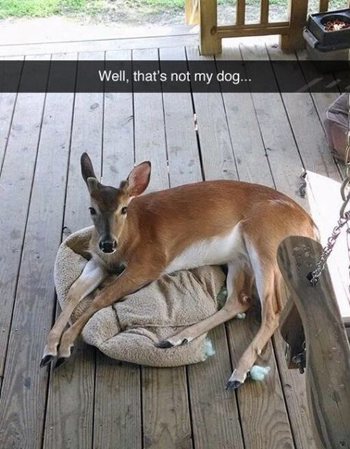 beds,deer,dogs