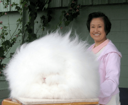Fluffiest Rabbit Ever?