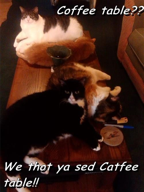 Coffee table??  We thot ya sed Catfee table!!