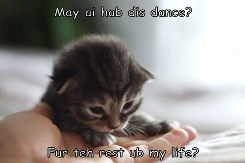 May ai hab dis dance?   Fur teh rest ub my life?