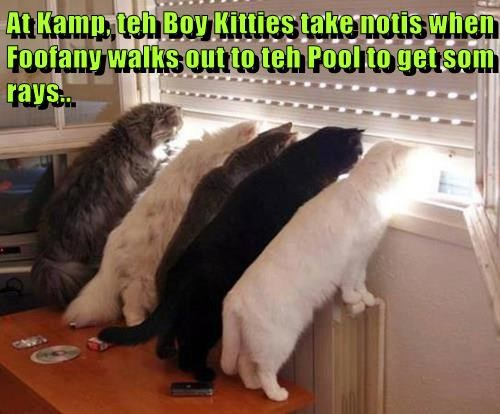 At Kamp, teh Boy Kitties take notis when Foofany walks out to teh Pool to get som rays..