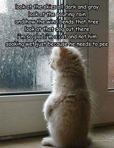 Ode to a litter box