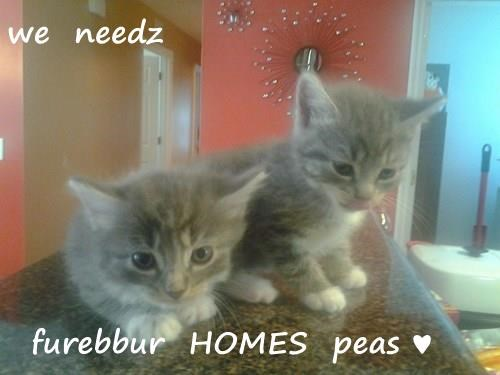 we  needz    furebbur  HOMES  peas ♥