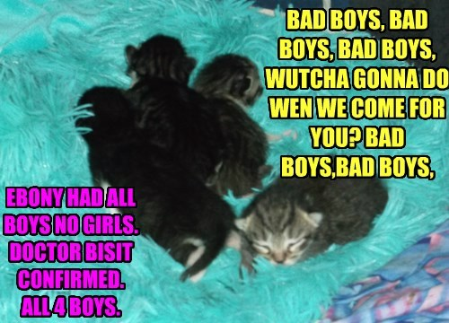 BAD BOYS, BAD BOYS, BAD BOYS, WUTCHA GONNA DO WEN WE COME FOR YOU? BAD BOYS,BAD BOYS,