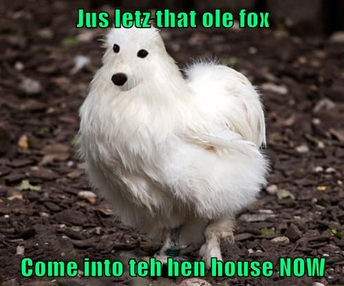 Jus letz that ole fox  Come into teh hen house NOW