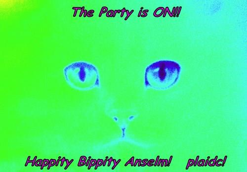 The Party is ON!!  Happity Bippity Anselm!   plaidc!
