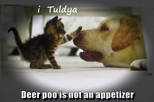 Deer poo is not an appetizer
