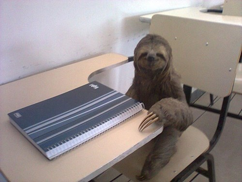 funny,sloth,school,slow motion,g rated,School of FAIL