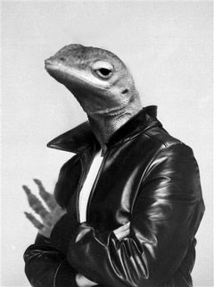 Photoshop Battle of the Day: The Unimpressed Lizard