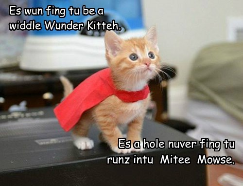 Es wun fing tu be a  widdle Wunder Kitteh.