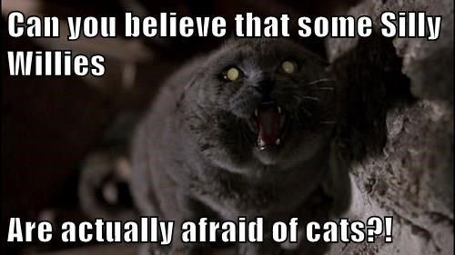 Can you believe that some Silly Willies  Are actually afraid of cats?!