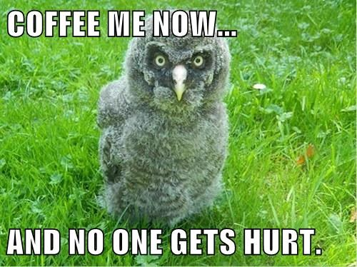 The Rare Morning Owl
