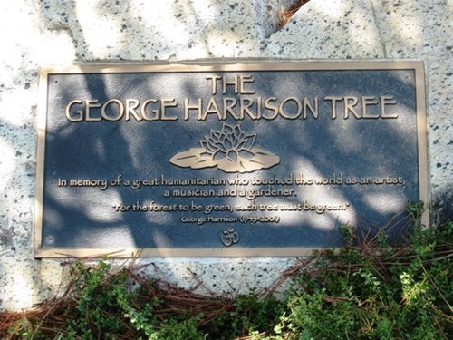 You Can't Make This Stuff Up: George Harrison Memorial Tree Killed by Actual Beetles
