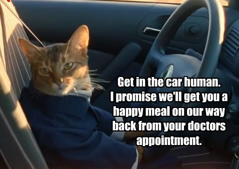Get in the car human. I promise we'll get you a happy meal on our way back from your doctors appointment.