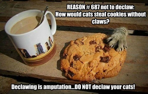 Reasons not to Declaw Your Cat!
