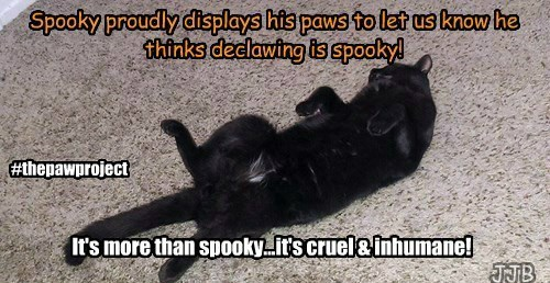 Declawing is Spooky!