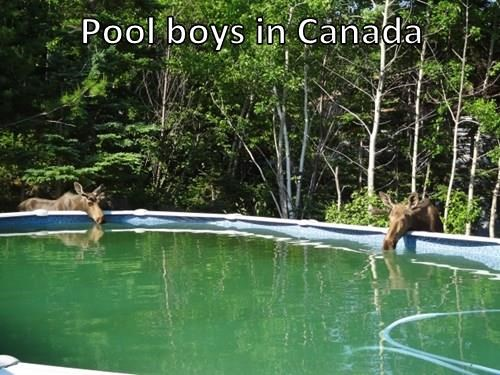 Pool boys in Canada