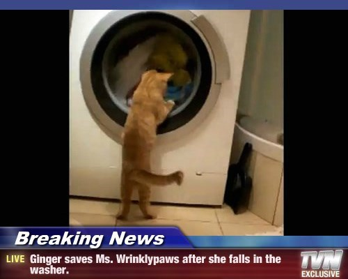 Breaking News - Ginger saves Ms. Wrinklypaws after she falls in the washer.