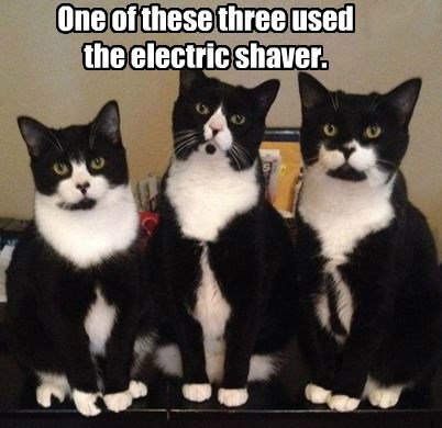 One of these three used the electric shaver.