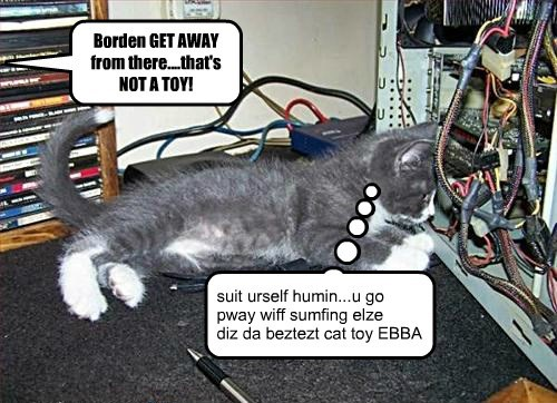 find da toy in ebbryfing