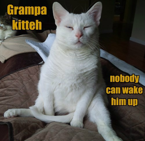 Grampa kitteh . . . nobody can wake him up